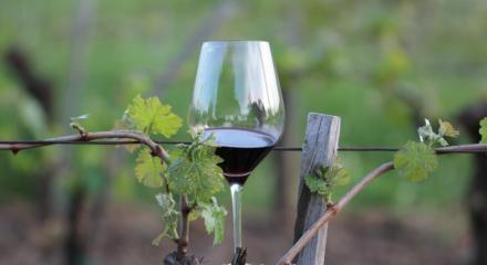 Private Wine Tours,  Corporate events, Wine tastings