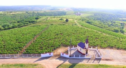 Silagiu hills, wine traditions and modernity in Banat