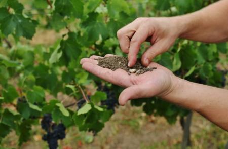 What is terroir and what does it do for wine?