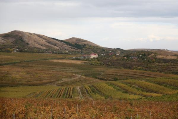 The Wine Road - Dealu Mare Vineyard