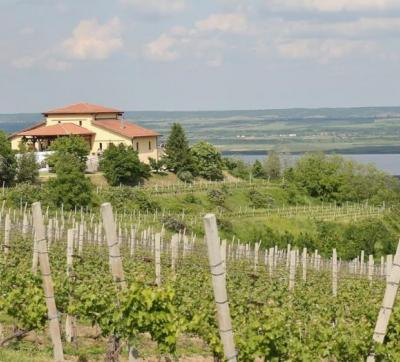 Stirbey Winery - Dragasani