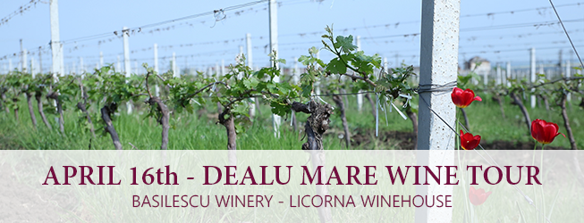 dealu mare wine tour